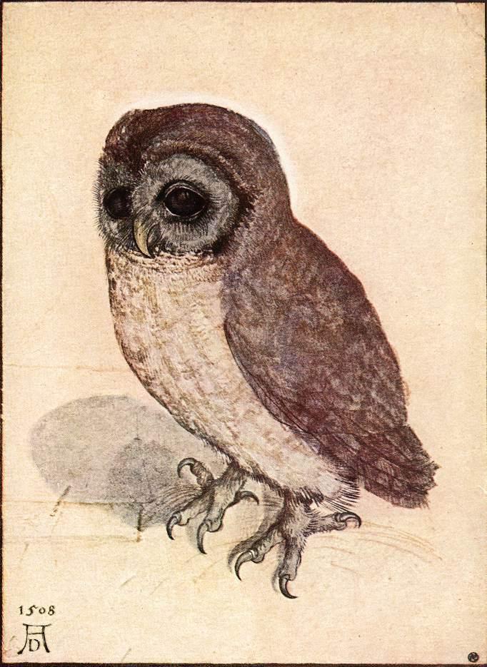 Albrecht Durer The Little Owl