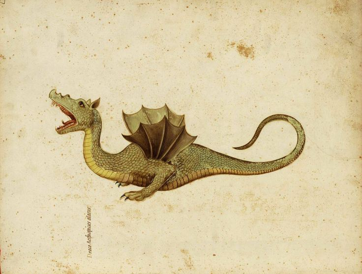 detail-of-a-watercolour-painting-of-a-dragon-from-a-manuscript-compiled-under-the-direction-of-ulisse-aldrovandi