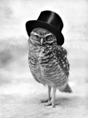 uggla med hatt