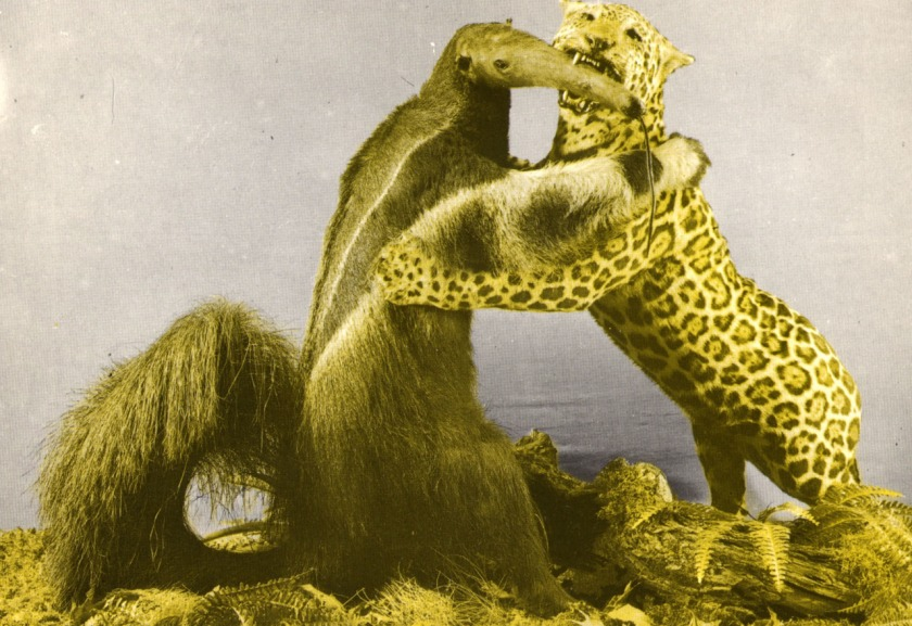 myrslok vs leopard