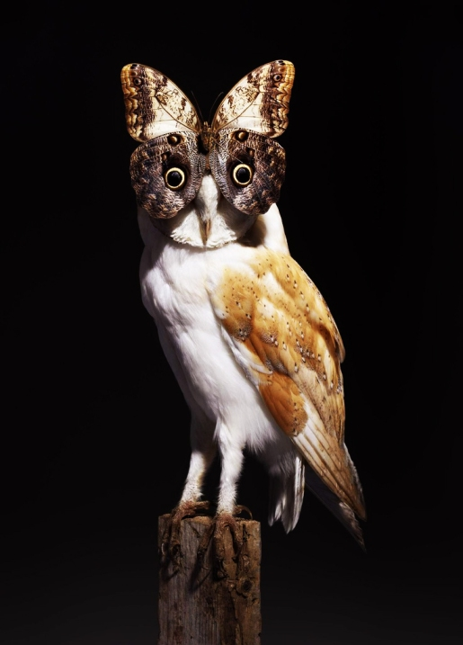 Nancy Fouts - Owl With Butterfly, 2012