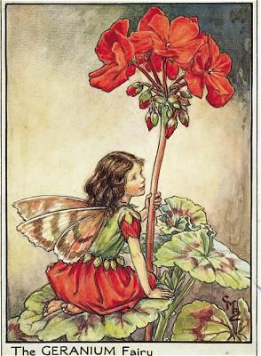 geranium fairy