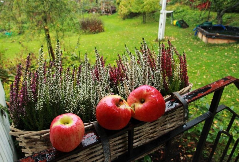 ljung och äpplen