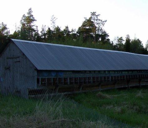 minkfarmen
