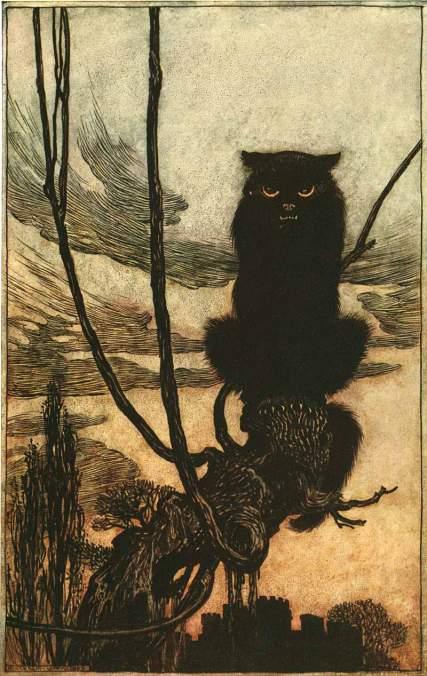 rackham-cat