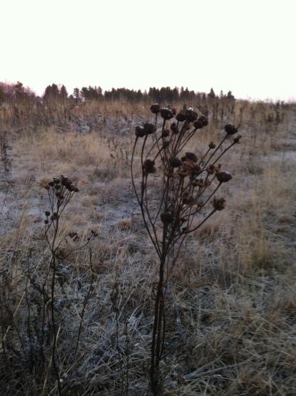 Frusen tundra