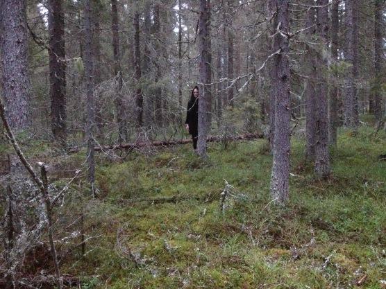 skogsraet